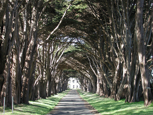 California tree tunnel, USA