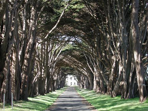 California tree tunnel, USA
