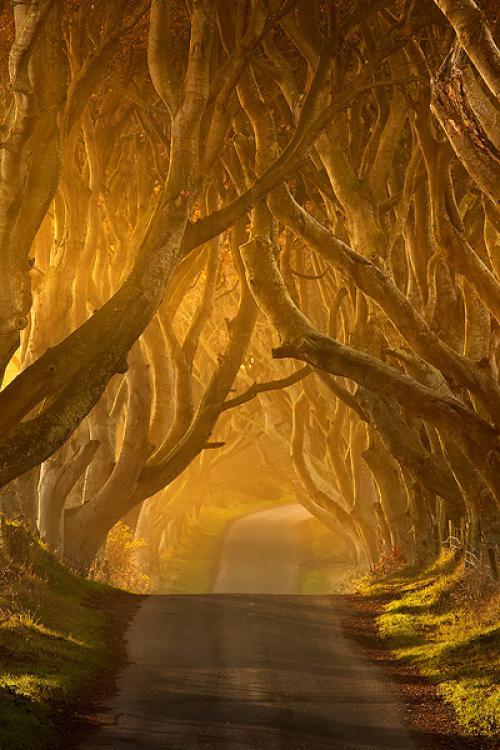 Co. Antrim tree tunnel, Ireland