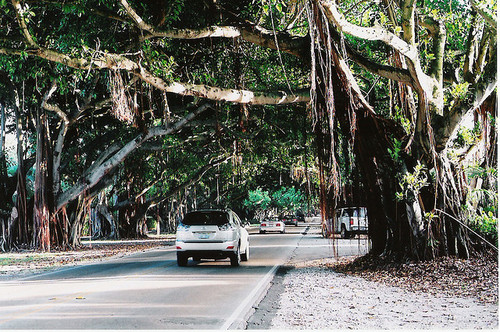 Florida tree tunnel, USA