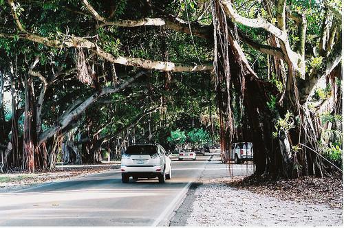 Florida tree tunnel, USA