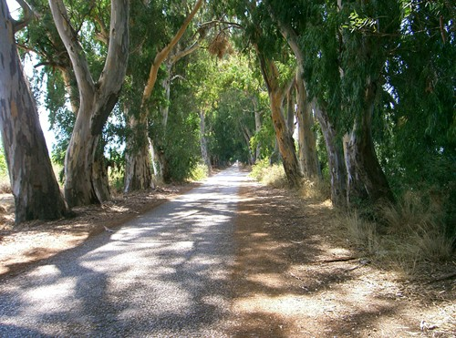 Marmaris tree tunnel, Turkey