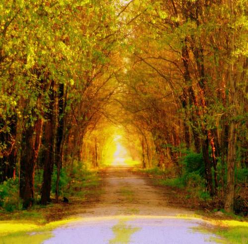 Missouri tree tunnel, USA