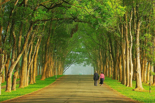 Taiwan tree tunnel