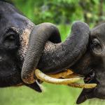 15 Adorable Snapshots of Animals Getting Amorous
